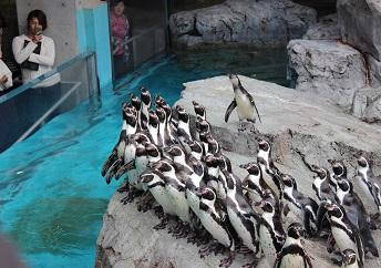 IMG_3776ペンギン